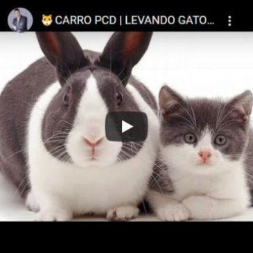🐱 Carro PCD | Levando Gato Por Lebre? 🐱